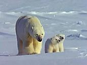 Watch Full Movie - משפחת החיות שלי - דב קוטב