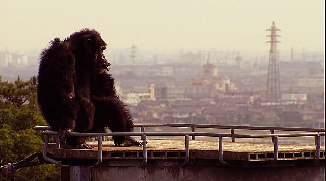 Watch Full Movie - האם חיות חושבות? - לצפיה בטריילר